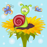Snail on the flower Royalty Free Stock Photo