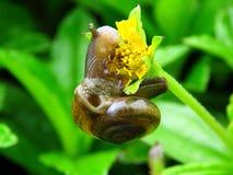 Snail, Flower, Snail Eating Stock Image