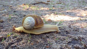 Snail in the forest stock video footage
