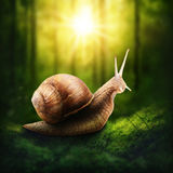 Snail in a forest Stock Photos