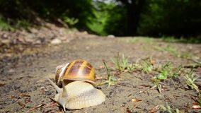 Snail in the forest Royalty Free Stock Images