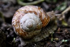 Snail on the forest road, shallow depht of field, blurred stock photos