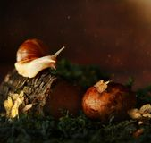 Snail in the forest on a tree stock images
