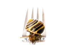 Snail on a Fork Royalty Free Stock Photo
