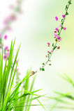 Snail on the fresh grass with pink floral Royalty Free Stock Photos