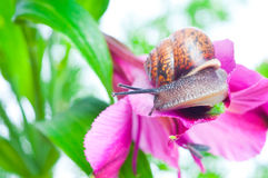 Snail on fresh leaf Royalty Free Stock Photos