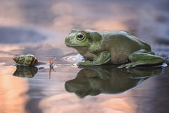 Snail and Frog sunset time. On the water and beauty in nature Stock Photo
