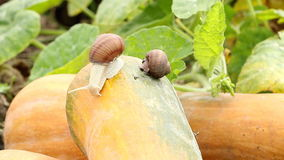 Snail in garden stock video footage