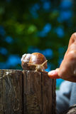 Snail in the garden in the countryside Stock Image