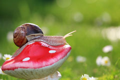 Snail in the garden Royalty Free Stock Images