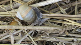 Snail. In the garden on the grass Royalty Free Stock Image