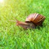 Snail in the garden on the grass Stock Photos