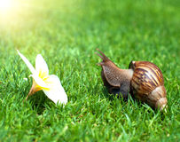Snail in the garden on the grass Stock Images