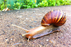 snail in garden Stock Photos