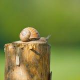 Snail in the garden on a tree Stock Photos