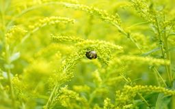 Snail in the garden yellow flowers beautiful nature close-up. Yellow flower nature plant garden green color nature close-up day no people outdoors snail Stock Photos