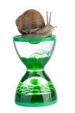 Snail and gel hourglass Stock Image