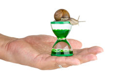 Snail and gel hourglass on the palm Royalty Free Stock Photos
