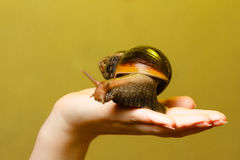 Snail in the girls hand Stock Photo
