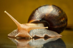 Snail on the glass Stock Photo