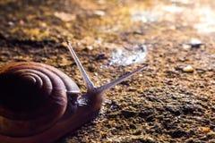 A Snail gliding on the wet stone texture. stock photos