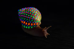 Snail with glowing colorful speckled shell Stock Image