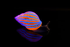 Snail with glowing striped shell Royalty Free Stock Image