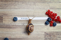 Snail going over the finish line Royalty Free Stock Photography