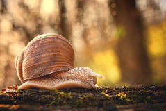 Snail. Going on the trunk Stock Photos