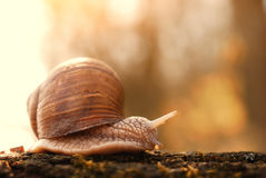 Snail. Going trunk in a forest Royalty Free Stock Photography