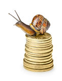 Snail on golden coins Royalty Free Stock Image