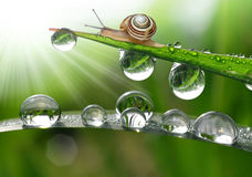 Snail on grass. Small Snail on dewy grass closeup Royalty Free Stock Images