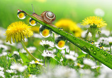 Snail on grass. Small Snail on dewy grass close up Royalty Free Stock Image