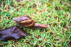 Snail on grass Stock Image