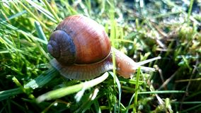 Snail in grass Royalty Free Stock Photography