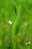 Snail in the grass Royalty Free Stock Images