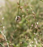 Snail on grass in nature. macro. In the park in nature stock photography