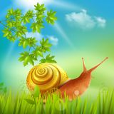 Snail In Grass Realistic Royalty Free Stock Images