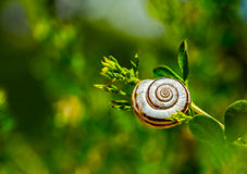 Snail on a grass. Single snail on a grass Stock Images