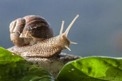 Snail. Among grass and stones Royalty Free Stock Photo