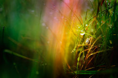 Snail in grass wallpaper Royalty Free Stock Photo