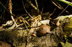 Snail and grasshopper Royalty Free Stock Image