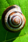 Snail on green Royalty Free Stock Photos