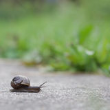 Snail on green background Stock Photos