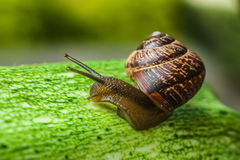 Snail. On the green background Royalty Free Stock Photo