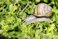 Snail on green bush Stock Photos