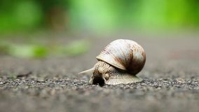 Snail on green foliage background stock footage