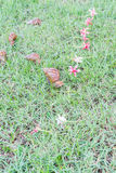 Snail on green grass. Stock Photography