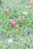 Snail on green grass. Stock Image