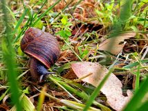 Snail on green grass stock photography